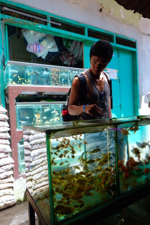 Chang fra Danmark - fishmarket